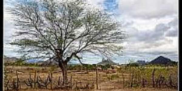 Vista da região de São Joaquim-Foto:flickriver.