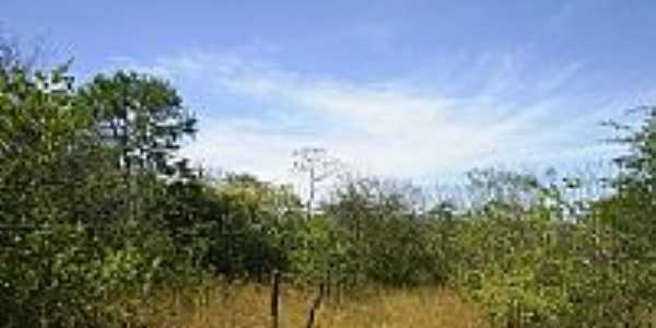 RPPN Serra das Almas em Tucuns por bekbra