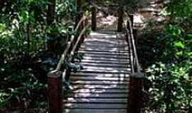 Ubajara - Ponte da Trilha no Parque Nacional de Ubajara -Foto:S. F. da Costa