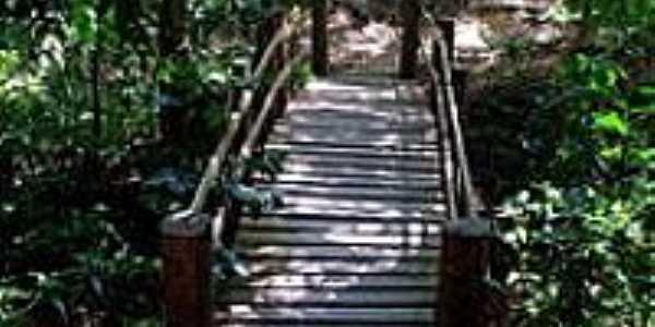Ponte da Trilha no Parque Nacional de Ubajara -Foto:S. F. da Costa