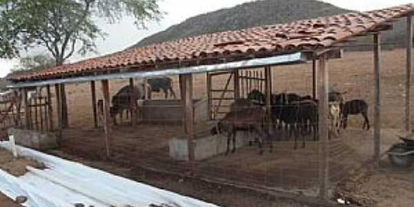 Senador Rui Palmeira-AL-Área rural