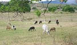Umari - Pastagem em Umari-Foto:Helio Freire