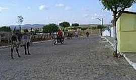 Umari - Vaca em rua de Umari-Foto:paulopedro.