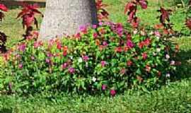 Viçosa do Ceará - Viçosa do Ceará-CE-Flores na praça-Foto:gaucho.pancho
