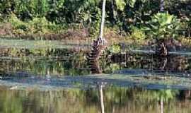 Viçosa do Ceará - Viçosa do Ceará-CE-Reflexos no Lago-Foto:gaucho.pancho