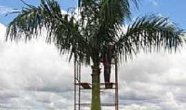Ceilândia - Detetizador de Palmeira-Foto:Guaraci de Sousa Vie ...