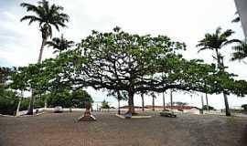 Anchieta - Anchieta-ES-Árvore centenária na frente do Santuário-Foto:sgtrangel