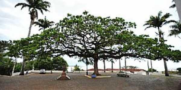 Anchieta-ES-Árvore centenária na frente do Santuário-Foto:sgtrangel