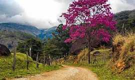 Castelo - Castelo-ES-Ipê rosa em estrada rural-Foto:caminhagente.