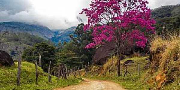 Castelo-ES-Ipê rosa em estrada rural-Foto:caminhagente.