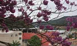 Dores do Rio Preto - Ipê Rosa em Dores do Rio Preto-Foto:arievil