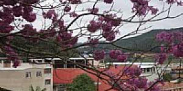 Ipê Rosa em Dores do Rio Preto-Foto:arievil