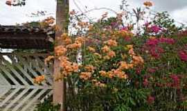 Viçosa - Primaveras em Tangil, Viçosa-Foto:valerio.alagoas