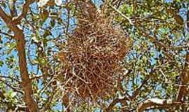 Itaici - Itaici   (ninho de uma ave), Por Romário José Ciríaco