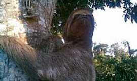 Jaguaré - Preguiça na roça-Foto:RENATO-LUCHI-MARTINS