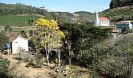 Melgaço - Ipe Amarelo em Melgaço-Foto:anivaldo kuhn