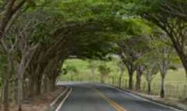 Mucurici - portal de �rvores, Por COMUNICACAO