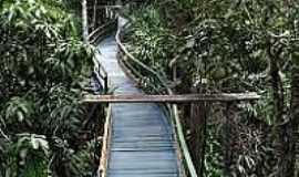 Ariaú - Ponte-Foto:flickr.com