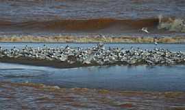 Regência - Aves na foz do rio Doce, Regência ES - por Alan Cepile