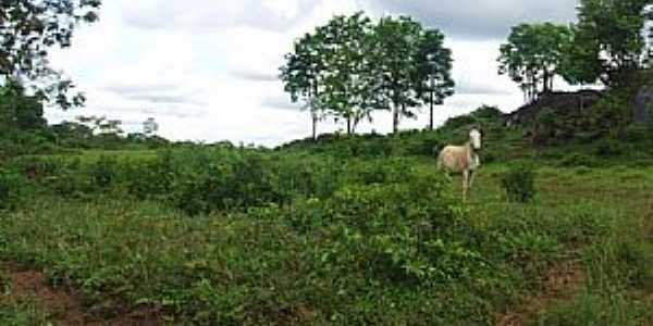 Amaralina-GO-Área rural-Foto:Arolldo Costa