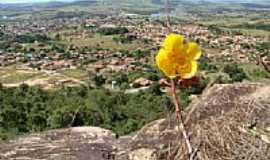 Anicuns - Flor na Serra do Felipe e a cidade ao fundo-Foto:João Molés
