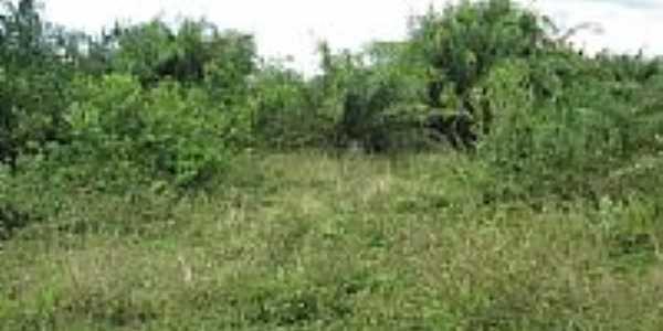 Vegetação ribeirinha-Foto:tmorato