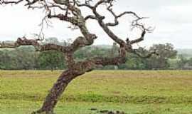 Aragoiânia - Aragoiânia-GO-Árvore do Cerrado-Foto:Arolldo Costa Olivei…