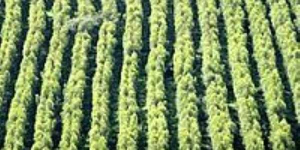 Eucalíptos-Foto:Leoiran