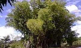 Cezarina - Bambu e o rio em Cezarina-GO-Foto:Mayara Paula