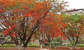 Cezarina - Jardim CIMPOR em Cezarina-GO-Foto:MANOEL