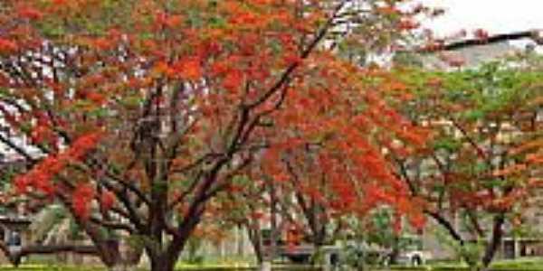 Jardim CIMPOR em Cezarina-GO-Foto:MANOEL