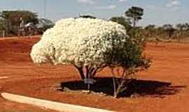 Chapad�o do C�u - Belo arbusto no port�o de entrada do Parque das Emas-Foto:Rafael Jos� Rorato