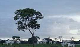 Chapadão do Céu - Fim de tarde na fazenda-Foto:Luciana Amaral