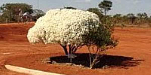 Belo arbusto no portão de entrada do Parque das Emas-Foto:Rafael José Rorato