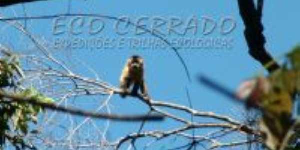 FAUNA DO CIDADE OCIDENTAL, Por EDINHO ROCHA (FOTOGRAFO AMBIENTALISTA DO GRUPO ECO CERRADO MORRADO DE CIDADE OCIDENTAL