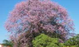Doverlândia - Doverlândia-GO-Barriguda florida-Foto:elenir gonçalves