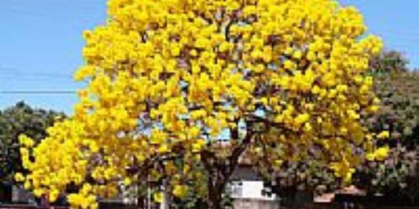 Ip� Amarelo-Foto:bethcosta