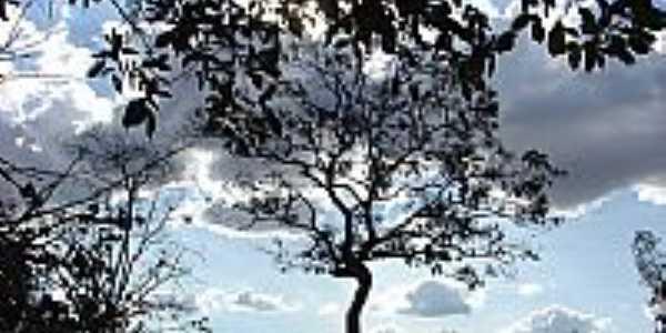 �rvores Nativas do Cerrado-Foto:bethcosta