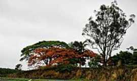 Morrinhos - Morrinhos-GO-Flamboyant na beira da Rodovia-Foto:luciano.ifgoiano