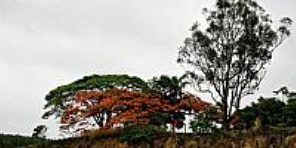 Morrinhos-GO-Flamboyant na beira da Rodovia-Foto:luciano.ifgoiano