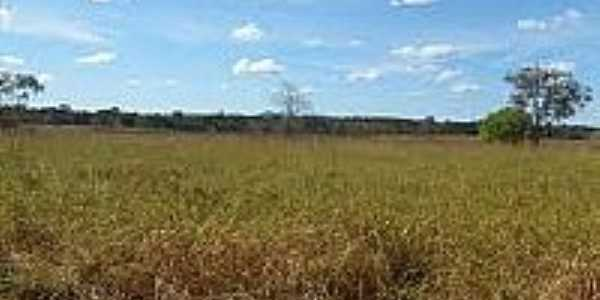 Fazenda no Município de Novo Planalto-Foto:mfrural.