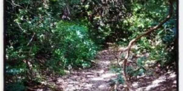 caminhada na floresta próximo a freguesia do andirá, Por fabio de paula