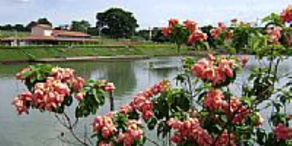 Palminópolis foto daniart