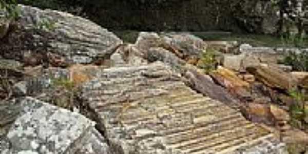 Piren�polis-GO-F�sseis de �rvore primitiva,margem do Ribeir�o Santa Maria-Foto:Pe. Edinisio Pereira�