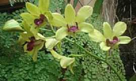 Pontalina - Orquidea em Pontalina por juniorpnn