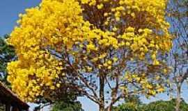 Portelândia - Ipê Amarelo-Foto:FWKL