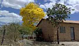 Rianápolis - Ipê amarelo-Foto:Juliermeambientalist…
