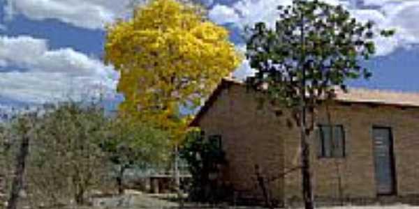 Ipê amarelo-Foto:Juliermeambientalist…
