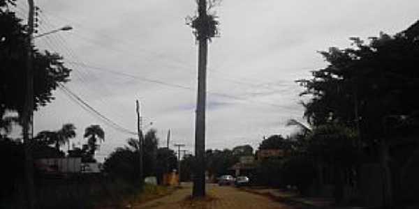 Santa Rita do Araguaia-GO-Coqueiro no meio da passagem-Foto:Guilherme N. Ferraresi