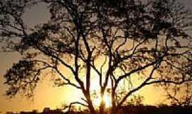 Santo Antônio de Goiás - Árvore do Cerrado pôr do Sol-Foto:augusto_mario